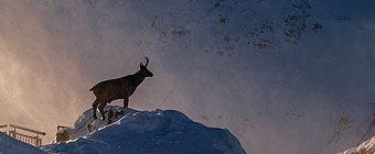 национальный парк приэльбрусье
